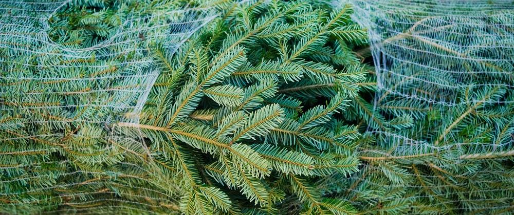 Nordmann Christmas Tree - Birchen Grove